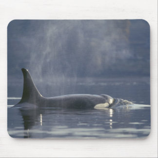 Orca del Orcinus de la ballena de la orca de la he Alfombrilla De Ratones