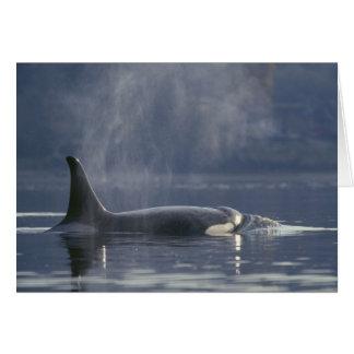 Orca del Orcinus de la ballena de la orca de la he Tarjeta De Felicitación
