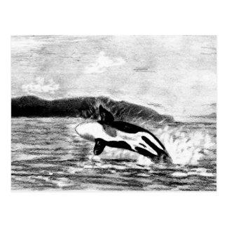 Orca del Orcinus Postal