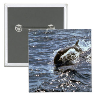 Orca falsa pin