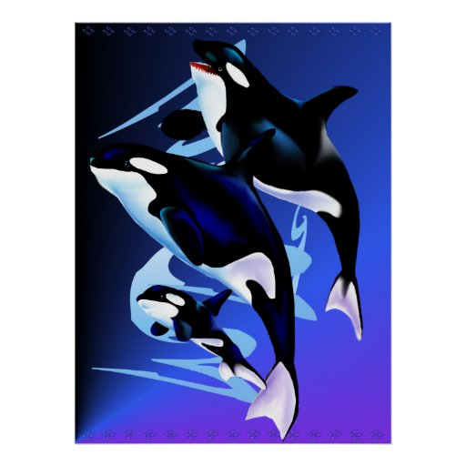 Orca Family Print