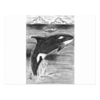 Orca Freedom Postcard