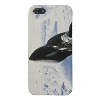 orca iPhone 5 carcasas