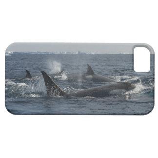 orca funda para iPhone SE/5/5s
