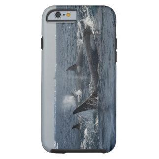 orca funda resistente iPhone 6