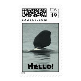 Orca Hello Stamp