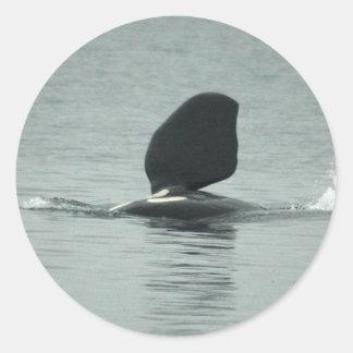 Orca Hello Stickers