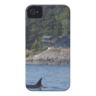 Orca hermosa de la orca en el estado de Washington Carcasa Para iPhone 4 De Case-Mate