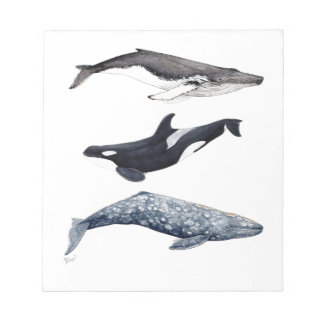 Orca, hunchbacked whale and gray whale notepad