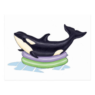 Orca in a kids swimming pool postcard