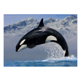 Orca in the leap large business card
