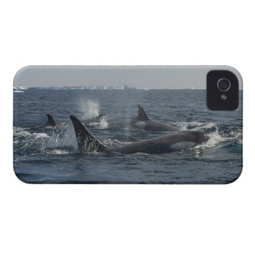 orca iPhone 4 protector