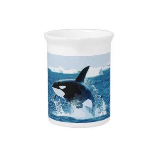 Orca Jarra
