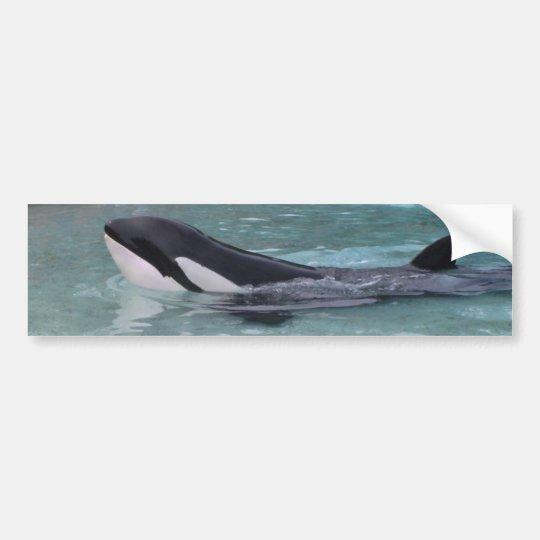 Orca...Killer Whale bumper sticker