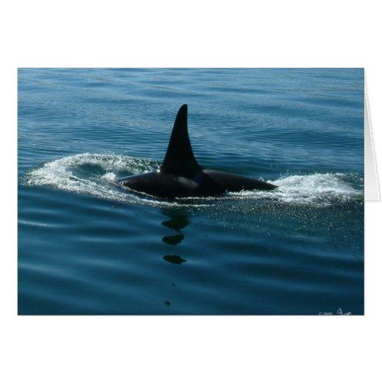 Orca Killer Whale Card