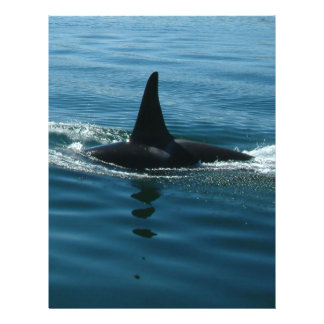 Orca Killer Whale Full Color Flyer