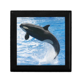 Orca Killer Whale Gift Boxes