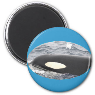 Orca Killer Whale Head - Oval 2 Inch Round Magnet