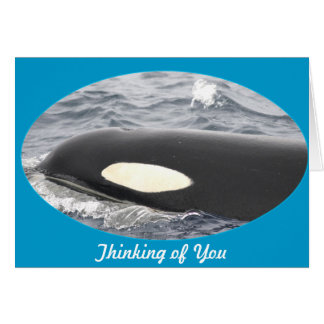 Orca Killer Whale Head - Oval Card