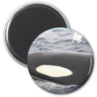 Orca Killer Whale Head - Oval Refrigerator Magnets