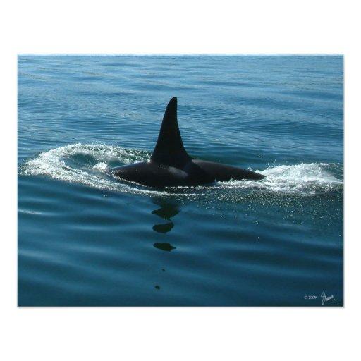 Orca Killer Whale Custom Invite