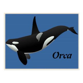 Orca, Killer Whale Postcard