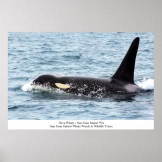 Orca Killer Whale Poster San Juan Island Large
