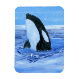 Orca killer whale vinyl magnet