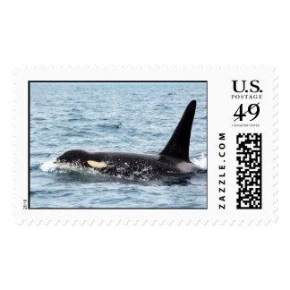 Orca Killer Whale san juan postage stamp