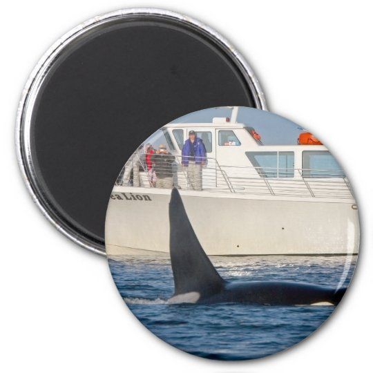 Orca Killer Whale -transient, washington 2 Inch Round Magnet