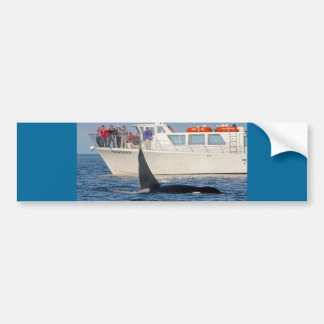 Orca Killer Whale -transient, washington Car Bumper Sticker