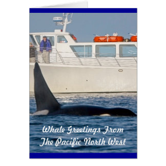 Orca Killer Whale -transient, washington Card