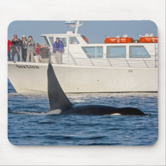 Orca Killer Whale -transient, washington Mouse Pad