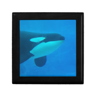 orca killer whale underwater blue jewelry box