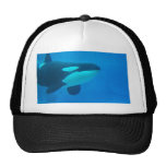 orca killer whale underwater blue hat