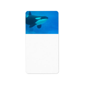 orca killer whale underwater blue address label