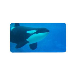 orca killer whale underwater blue label