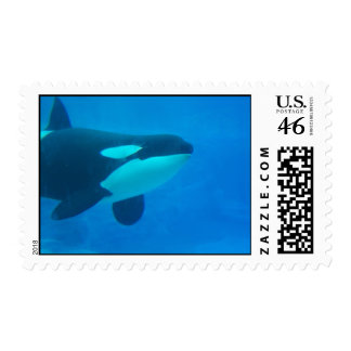 orca killer whale underwater blue postage stamps