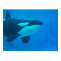 orca killer whale underwater blue postcard