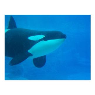 orca killer whale underwater blue postcard