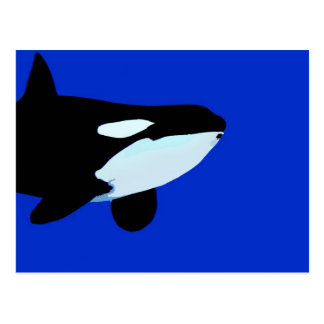 orca killer whale underwater graphic post cards