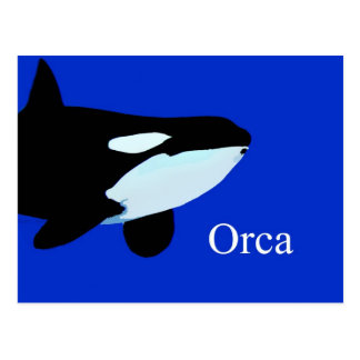 orca killer whale underwater graphic txt post cards
