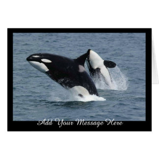 Orca Killer Whales Breaching Add Your Message Card