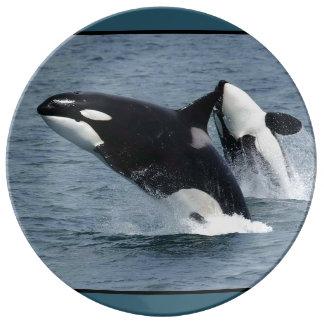 Orca Killer Whales Breaching Porcelain Plates