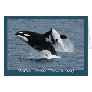 Orca Killer Whales Breaching Personalized Card