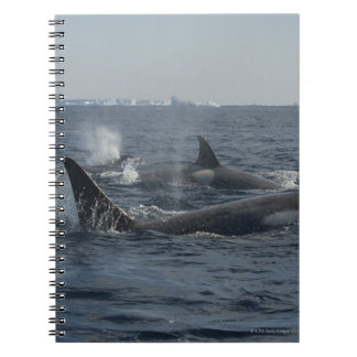 orca libretas espirales