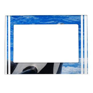 Orca Marcos Magnéticos De Fotos