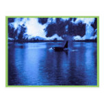 Orca masculina tarjetas postales