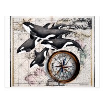 Orca Nautical Compass Postcard