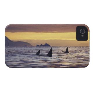 Orca o orcas carcasa para iPhone 4